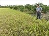 Hạn mặn kỷ lục, nông dân điêu đứng