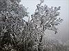 Băng tuyết phủ trắng đỉnh Mẫu Sơn
