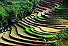 Ruộng bậc thang mùa nước đổ hút du khách