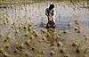 Đồng bằng sông Cửu Long đang... lâm nguy