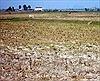 Năm nay miền Trung, Tây Nguyên sẽ khô hạn khốc liệt hơn