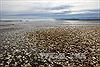 20 tấn cá mòi chết dạt vào bờ biển miền Nam Chile