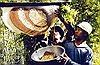 Quản lý chất lượng mật ong rừng U Minh Hạ