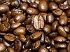 Cây cà phê có thể biến mất trong thế kỷ 21