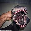 """Rợn người với loạt cá """"ngoài hành tinh"""" dưới biển sâu"""