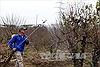 Đào thất thốn, nghề chơi công phu đất kinh kỳ