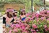 Lễ hội hoa đỗ quyên lần đầu tiên trên đỉnh Fansipan