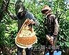 Ngăn chặn việc giả mạo thương hiệu mật ong U Minh Hạ, Cà Mau