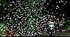 Ngỡ ngàng mùa bướm ở rừng Cúc Phương