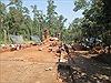 Hoàn thành phục dựng đoạn đường cổ tại Thánh địa Mỹ Sơn