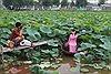 Chen chân chụp ảnh sen Hồ Tây