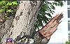 Di dời, đốn hạ 258 cây xanh trên đường Tôn Đức Thắng để xây cầu Thủ Thiêm 2