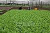 Cần hành lang pháp lý để phát triển nông nghiệp hữu cơ