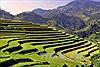 Tuần Văn hóa - Du lịch Mường Lò và Lễ hội khám phá ruộng bậc thang Mù Cang Chải