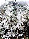 Lạnh 3 độ C, Mù Cang Chải - Yên Bái xuất hiện băng giá
