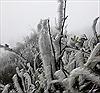 Vùng cao Mù Cang Chải chủ động đối phó với băng giá, sương muối