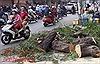 Cây xanh bật gốc đè 2 xe máy, 3 người bị thương