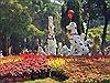 Ngắm các loại hoa, bonsai đẹp, lạ tại Hội hoa Xuân Tao Đàn