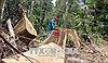 Tám cán bộ kiểm lâm bị kỷ luật vì để xảy ra phá rừng