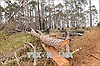 Kỷ luật 5 cán bộ kiểm lâm liên quan vụ phá rừng nghiêm trọng ở Quảng Bình