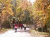 Lạc bước bốn mùa trong rừng sâu Đông Thế