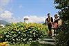 Lạc bước chẳng muốn về ở đồi hoa hướng dương khổng lồ tại chân núi Fansipan