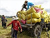 Nhiều tín hiệu vui cho xuất khẩu gạo trong các tháng cuối năm