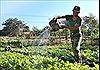 Mướt xanh vườn rau của bộ đội Biên phòng Gia Lai