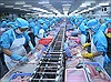 Đầu tư mạnh cho cá tra chất lượng cao, tăng cạnh tranh tại thị trường Trung Quốc