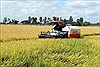 Nông dân được mùa lúa nhờ né hạn mặn
