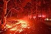 200 đám cháy rừng vẫn hoành hành tại Australia
