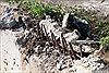 Xử lý nghiêm việc phá đường bờ kè phía Nam sông Đăk Bla, Kon Tum