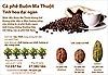 Cà phê Buôn Ma Thuột - Tinh hoa đại ngàn