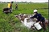 Các địa phương dồn sức ngăn chặn dịch tả lợn châu Phi lây lan