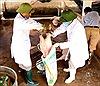 Địa phương đầu tiên ở Phú Thọ công bố dịch tả lợn châu Phi