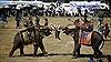 Xem voi Thái Lan diễn cảnh chiến trận, đá bóng