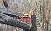 Nguy cơ cháy rừng cấp cực kỳ nguy hiểm ở 11 tỉnh
