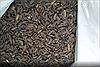 Mở trang trại nuôi ruồi để tái chế rác thải nhà bếp