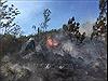 Bình Thuận nguy cơ cháy rừng cấp cực kỳ nguy hiểm