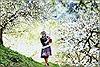 Đẹp mê hồn hoa mận nở trắng rừng