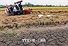 Chuyên gia khí tượng lý giải nguyên nhân nắng nóng và hạn hán 'trái mùa'