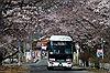8 năm sau thảm họa hạt nhân, Fukushima hồi sinh đón người dân trở về