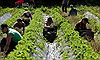 Anh tuyển dụng những người mất việc vì COVID-19 để bù đắp sự thiếu hụt lao động của ngành nông nghiệp