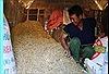 Cúng kho lúa đầu năm mới của đồng bào Bahnar