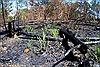 Lâm Đồng sẽ xử lý trách nhiệm người đứng đầu để xảy ra phá rừng