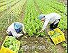 Kiểm soát nông sản an toàn qua Chợ thương mại điện tử