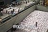 Hoạt động xuất khẩu gạo củaThái Lan vẫn khả quan trong nửa cuối năm nay