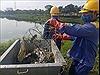 Cá chết tại hồ Yên Sở, Hà Nội