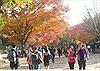 Lá vàng, lá đỏ vào đợt đẹp nhất mùa thu xứ Hàn