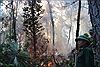 Cháy rừng lại bùng phát tại xã Xuân Hồng, Hà Tĩnh